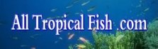 All Tropical Fish - Saltwater Fish, Corals and Freshwater Fish